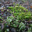 New Moss by PhoenixArt