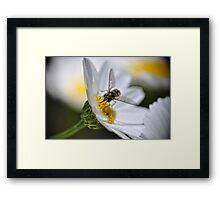 Sweet Nectar III Framed Print