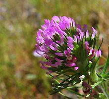 Paintbrush Flower-Hite Cove trail, Merced River, California by Alan Brazzel