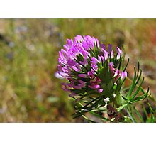 Paintbrush Flower-Hite Cove trail, Merced River, California Photographic Print