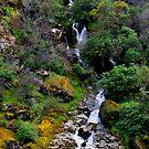 Waterfall-Merced River, Mariposa, Ca by Alan Brazzel