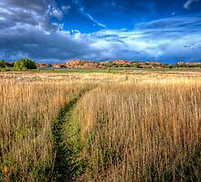 The Path Less Traveled by Bob Larson