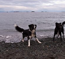 fun at the beach by Shawnna Taylor