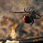 Red Back by Brian Watson