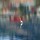 Egret In The Derwent River by Asoka
