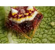 Two Spined Spider with Aphid Photographic Print