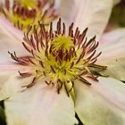 Clematis crown by WOBBLYMOL