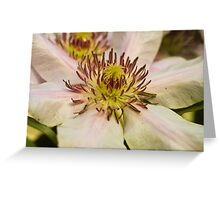 Clematis crown Greeting Card