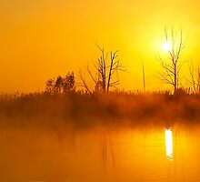Foggy dawn over Okavango swamp. by Rudi Venter