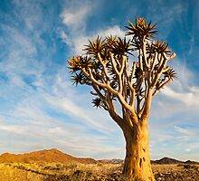 Quiver Tree | Namibia by Olwen Evans