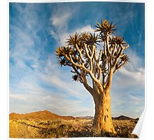 Quiver Tree | Namibia Poster