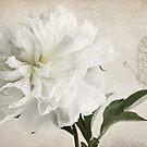 White peony whispers by IngeHG