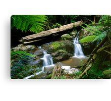 Olinda Falls - Dandenong Ranges Canvas Print