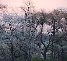 White Blush by Michael  Dreese