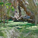 Swamp by Darrell Kelsey
