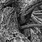 Tree Bark II by Darrell Kelsey