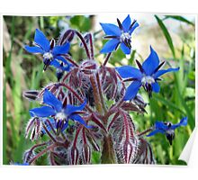 Amazing flowers Poster