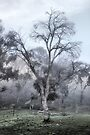 Farmyard Fog by yolanda