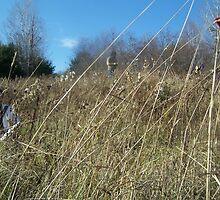 tall grass by benjam