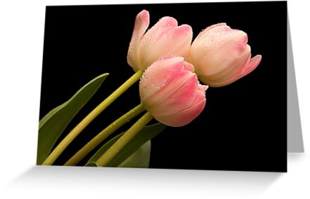 Tickled Pink by Ray Clarke