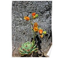 Blooming Succulent Poster