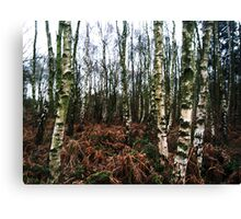 Woodland - Haughmond Hill Canvas Print
