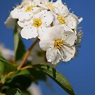 Spring Bouquet by Richard Skoropat