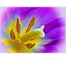 Tulip Central Photographic Print