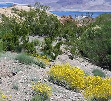 Spring in the desert by Tammy  (Robison)Espino