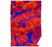 Flowers in blue & red  Poster