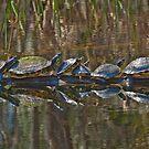 Turtle Siesta by Charlie