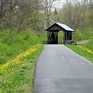 Springtime on the Covered Bridge Trail by debbiedoda