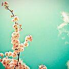 Retro springtime by Laura Cutmore