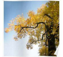 Autumn in Yellow Poster