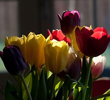 Backlit Tulip Bunch by Copperhobnob