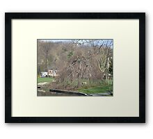 weepinwillow Framed Print