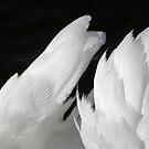 angel wings by mamba