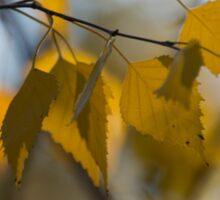Dreamy Yellow Leaves Swaying in the Wind  Sticker