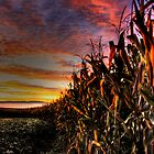 EARLY AUTUMN IN PENNSYLVANIA  by MIKESANDY
