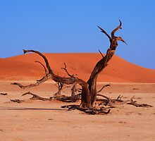 Dead Wood in the Soussevlei Desert, Namibia by linzijane
