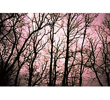 Tree prints #1 Photographic Print