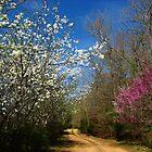 Blue Skies by NatureGreeting Cards ©ccwri