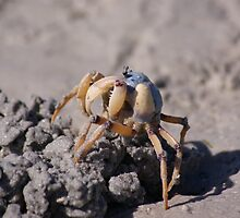 soldier crab by Steven Guy