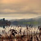 Mist and Reeds, Lake of Mentieth by David Mould
