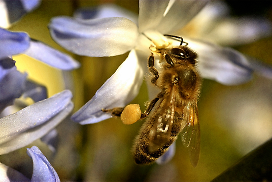 Honeybee by Priska Wettstein