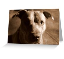 Jet The Pit Bull Greeting Card