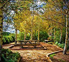 Silver Birch Grove by AnnabelHC