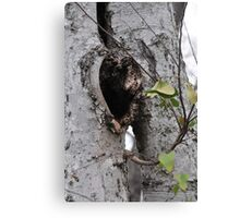 One Heart, Two Trees Canvas Print