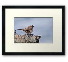Song Sparrow - Ottawa, Ontario Framed Print