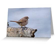 Song Sparrow - Ottawa, Ontario Greeting Card